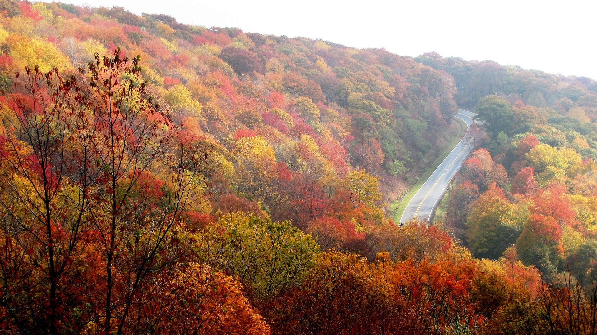 A road winding through a mountain covered in trees with autumn leaves.